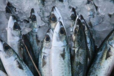 Fresh fish on market