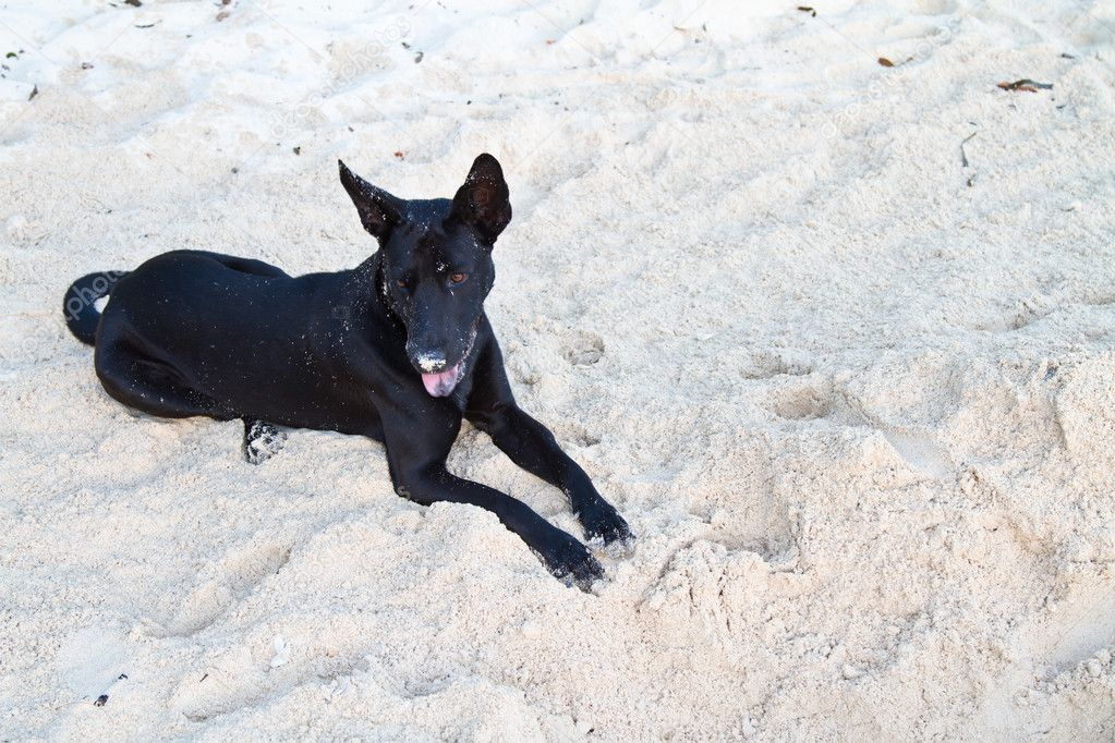 One dog at the beach