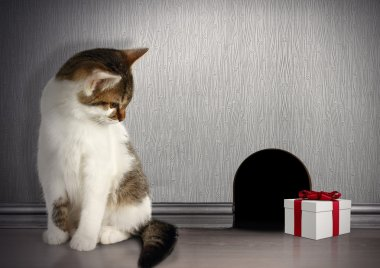 Funny trap concept, cat with gift near a mouse hole