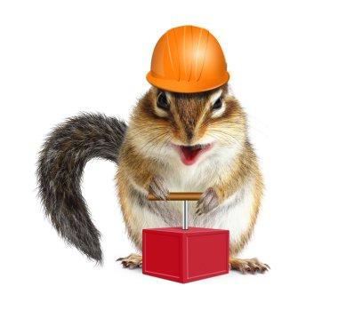 Funny animal chipmunk with detonator and hard hat, demolition co