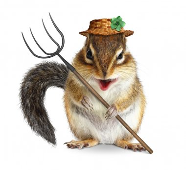 Funny animal farmer, squirrel with pitchfork and hat isolated on