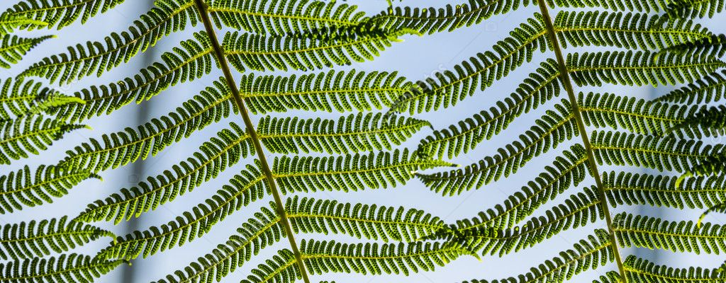 detail of green fern