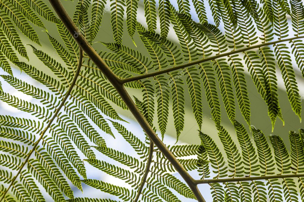 detail of green fern