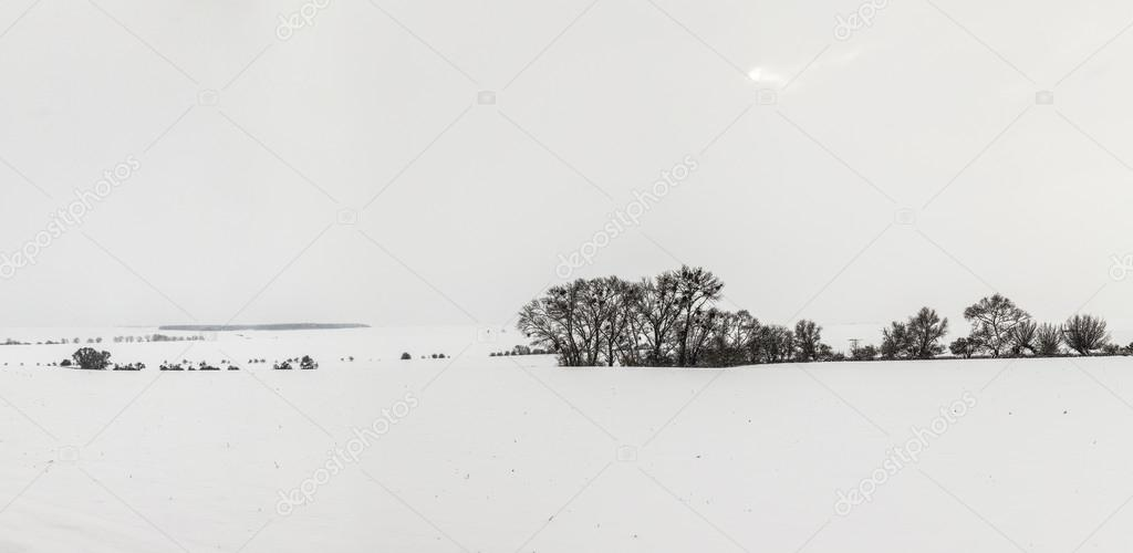white icy trees in snow covered landscape