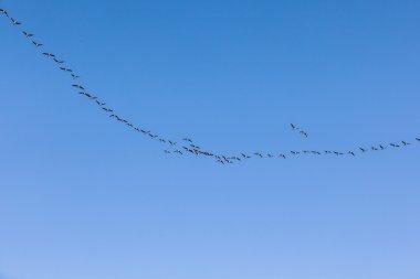 migrant bird in the sky