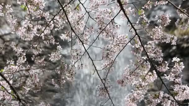Třešňový květ s vodopádem