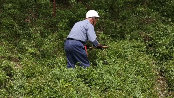 Zahradník prořezávání keřů strom s nůžky