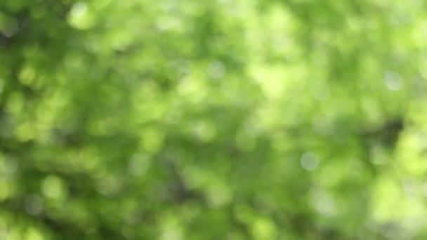 Rozostření pozadí přírody zelené listy