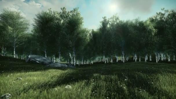 Bříza strom a timelapse mraky, sklopný
