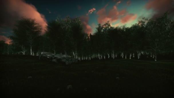 Březový les na západ slunce, zvedací fotoaparát