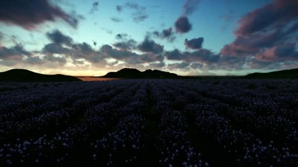 Levandulová pole proti krásné timelapse sunrise
