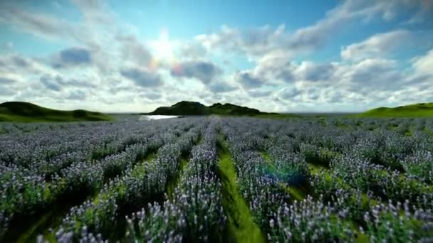 Levandulová pole proti krásné mraky, fotoaparát fly