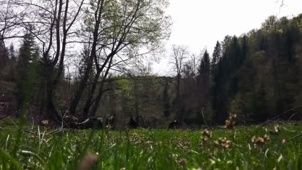 Muž výdeje kopřivy na zelené louce, malebná krajina s krávou na pozadí, přiblížit
