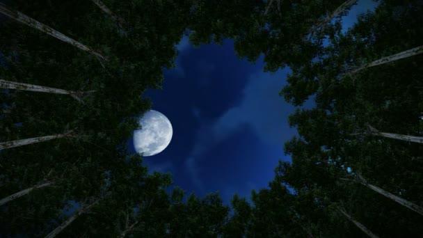 Podíval se na kruhu redwood stromy, mraky timelapse, úplněk