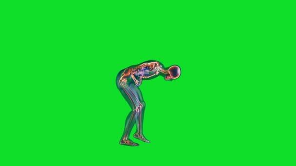 Menschlicher Röntgenkörper und Skelett, große Bauchschmerzschleife, Green Screen