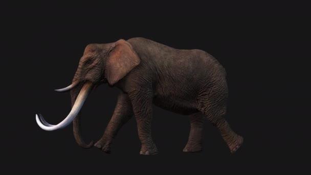 Elephant Walking, Seitenansicht Nahtlose Schleife, Luma Matte