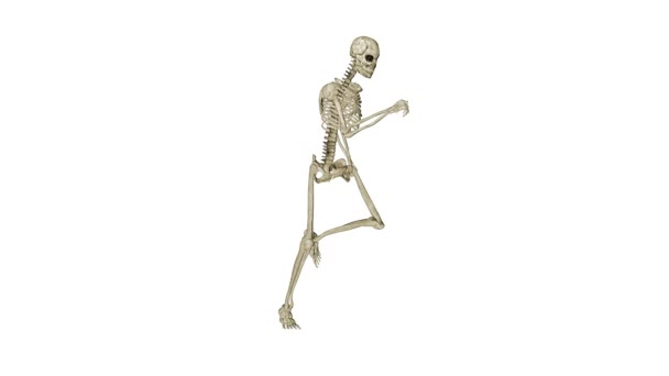 Skelett mit morphing in Mensch, weiß