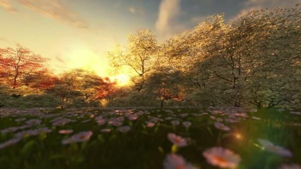 Spring scenery at sunrise, camera panning