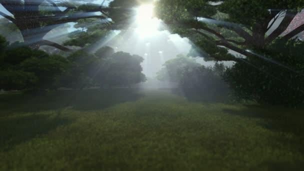 Magie lesa, slunce lesklý prostřednictvím stromy, kamera fly