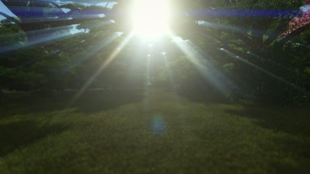 Magie lesa, slunce lesklý prostřednictvím stromů