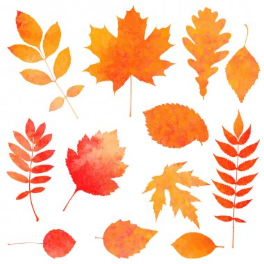 Watercolor collection of beautiful orange autumn leaves isolated on white background
