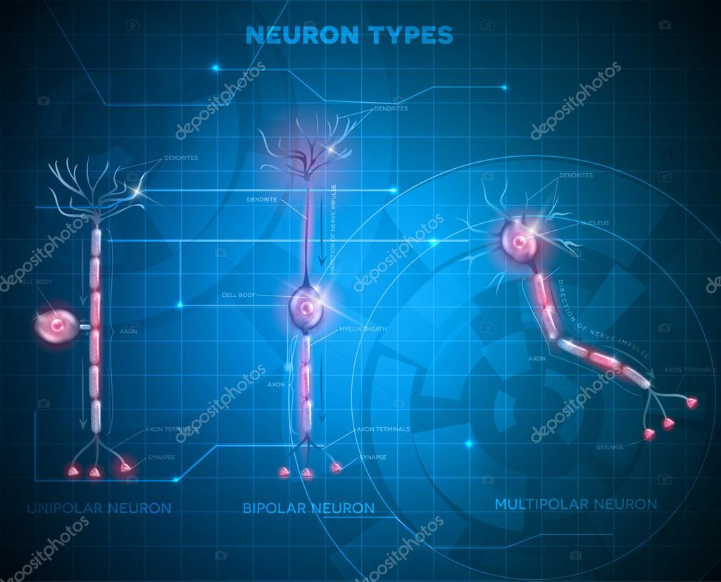 Tipos de neuronas, las células nerviosas — Archivo Imágenes ...