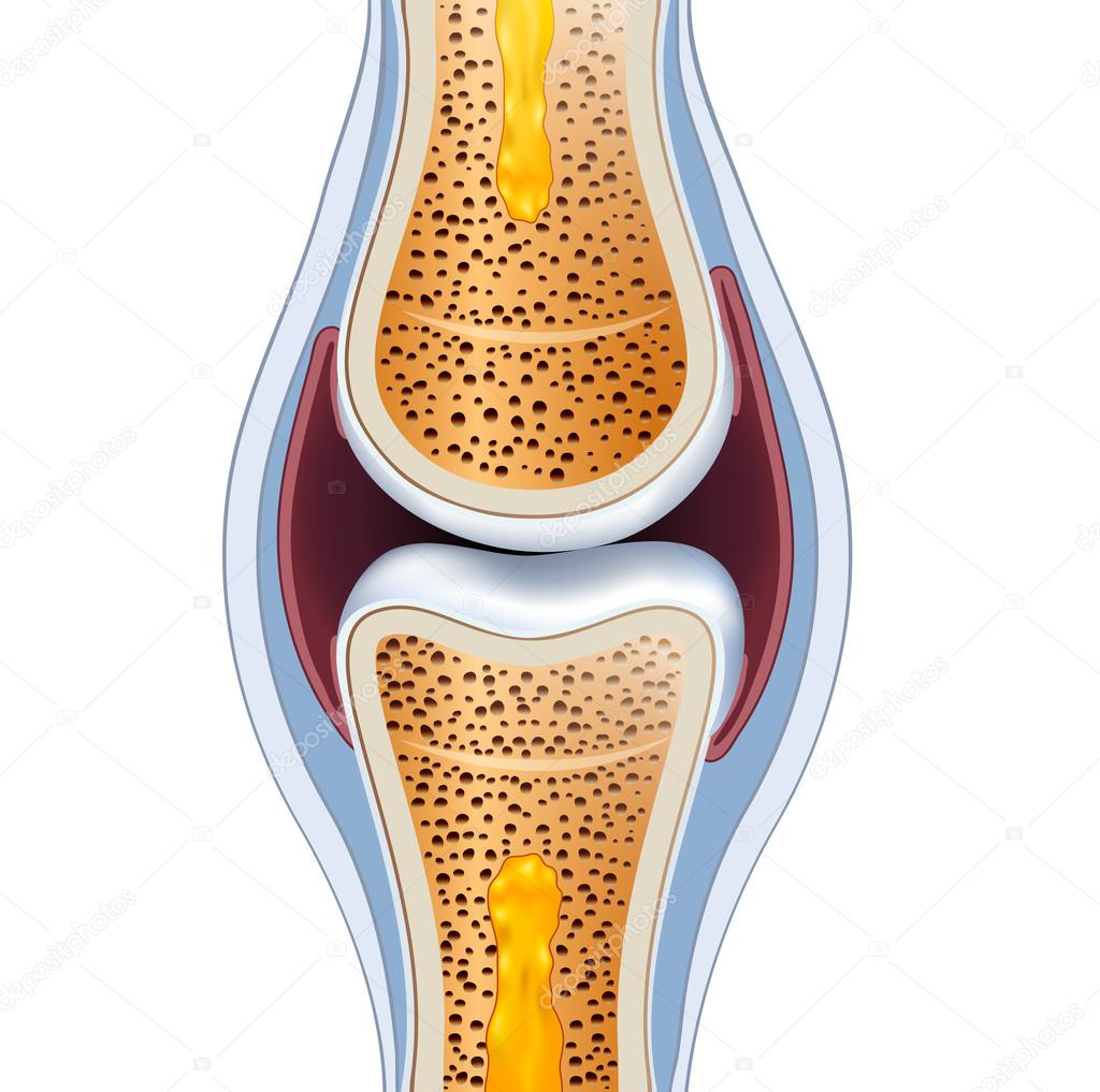 Normal synovial joint anatomy — Stock Vector © megija #53385985