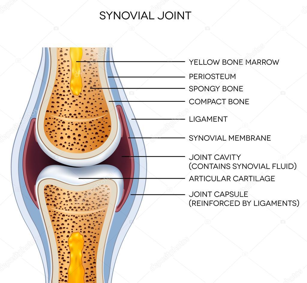 ᐈ Skeletal Stock Illustrations Royalty Free Skeleton Arm