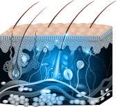 Fotografie Anatomie kůže abstraktní modrý design