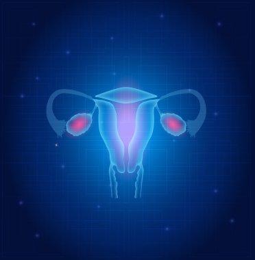 Uterus and ovaries anatomy blue background
