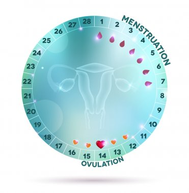 Beautiful light blue menstrual cycle graphic