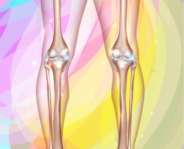 Healthy human legs
