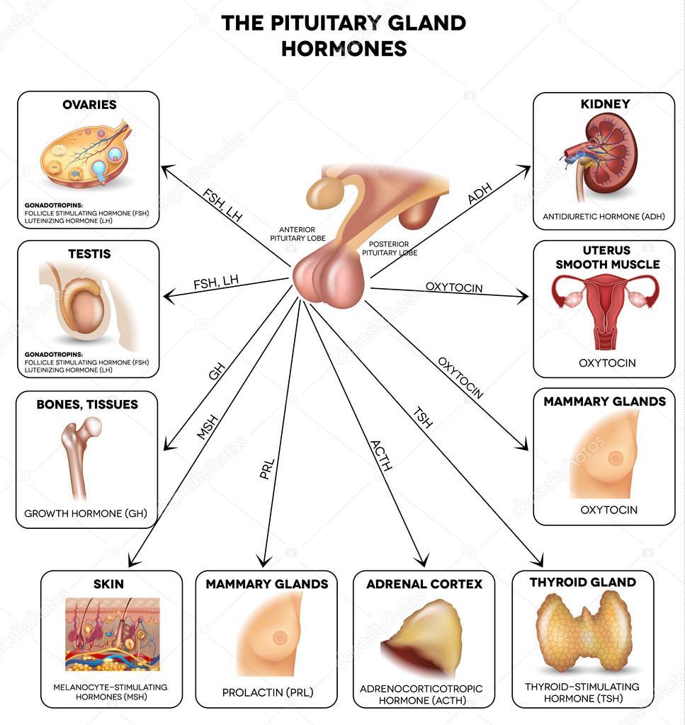 Cushing Sindrome Di
