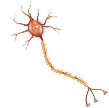 Nerve cell illustration