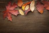 Fotografie podzimní listí na pozadí
