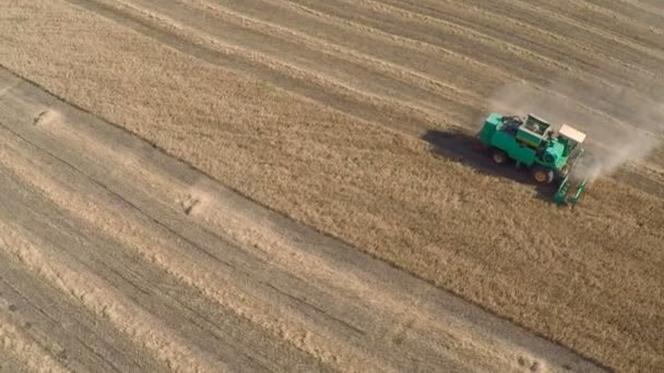 Harvester Mows the Field whea