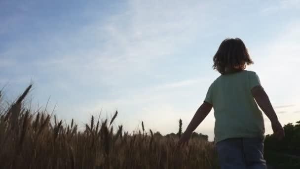 dítě, které běží přes louku pšenice
