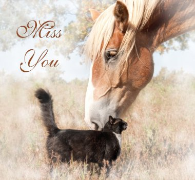 Miss You - big horse gently snuggling with a tiny kitty cat