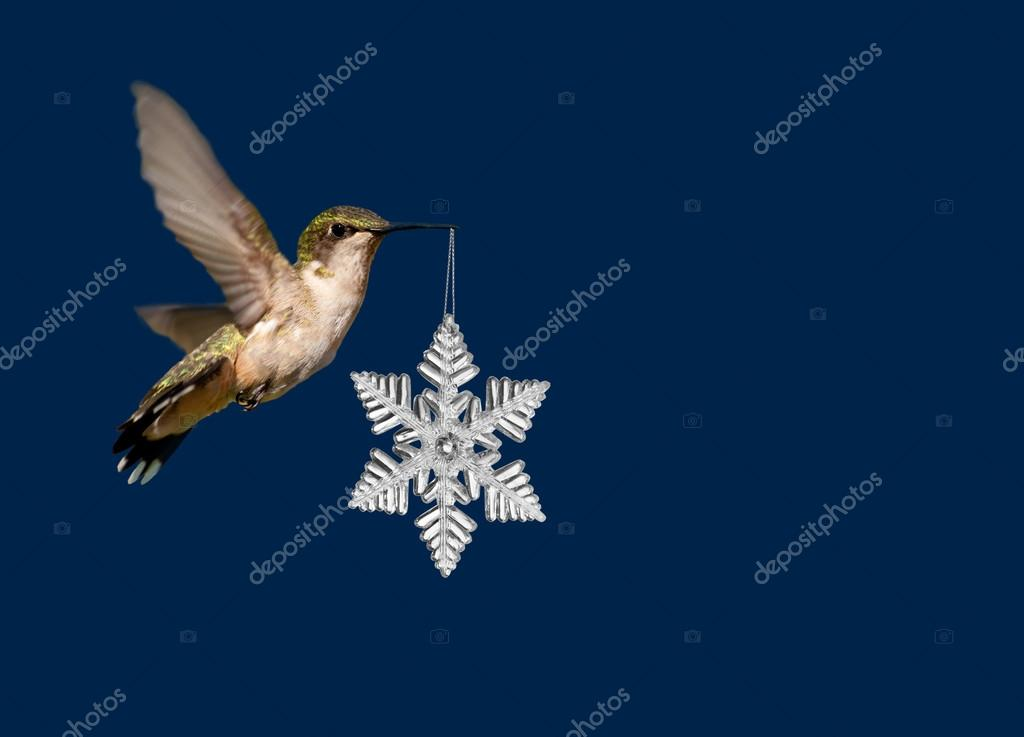hummingbird carrying a snowflake christmas ornament on deep blue background stock photo