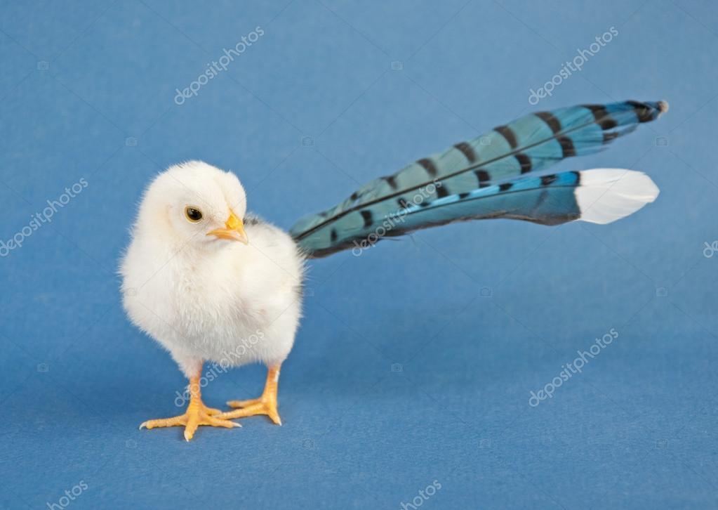 Velký pták v kuřátko