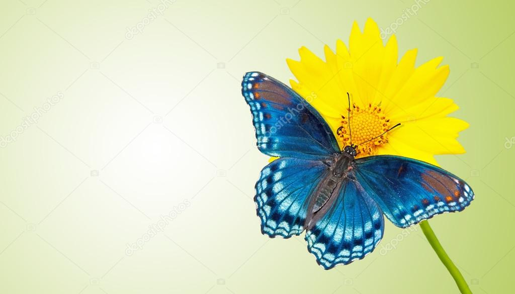 Business card design with blue butterfly on a yellow flower with ...