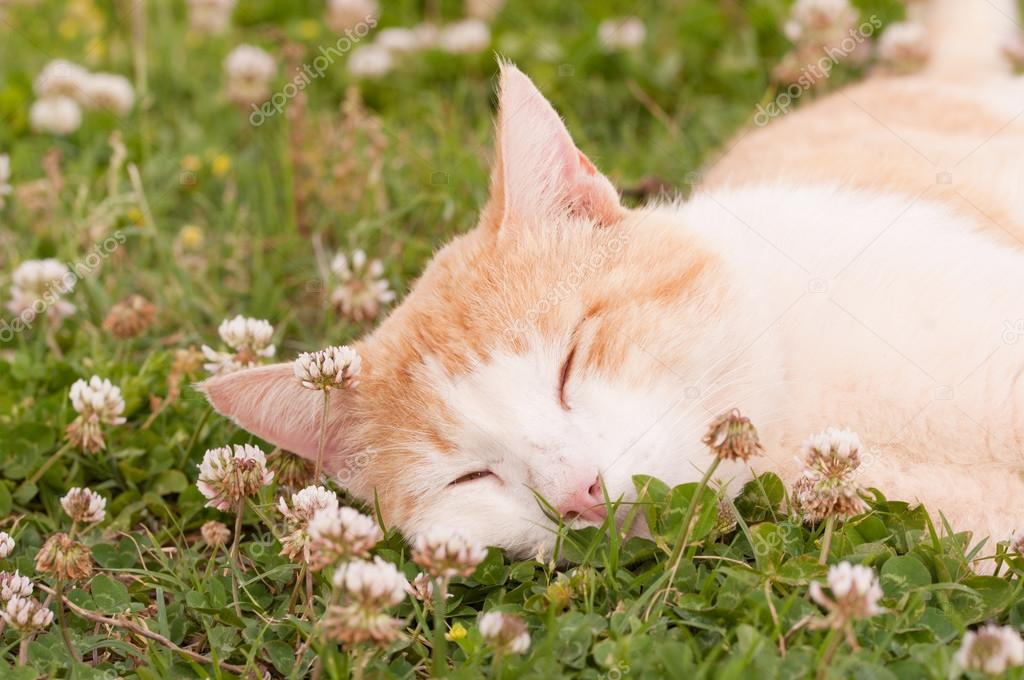 Happy cat sleeping peacefully in white clover