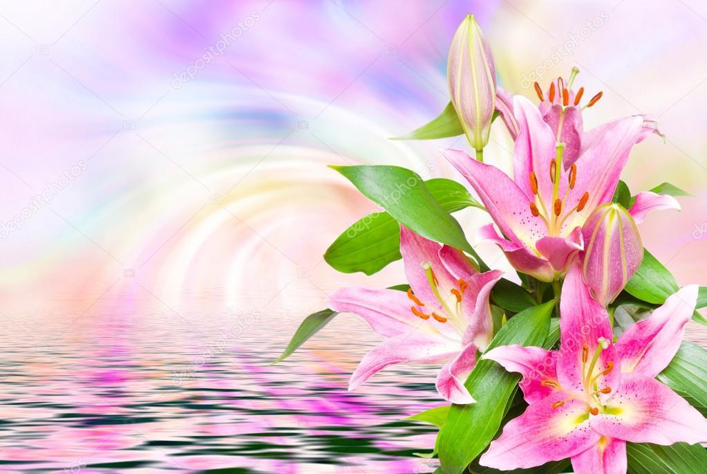Nahaufnahme von Rosa Lilien — Stockfoto © MaxPayne #104301328