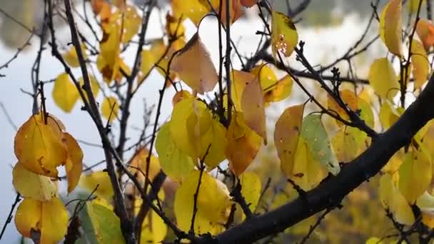 beautiful autumn leaves. the last leaves on the branches