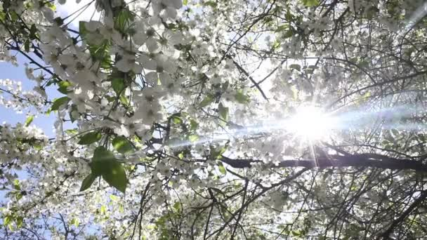Beautiful nature scene with blooming tree and sun flare.