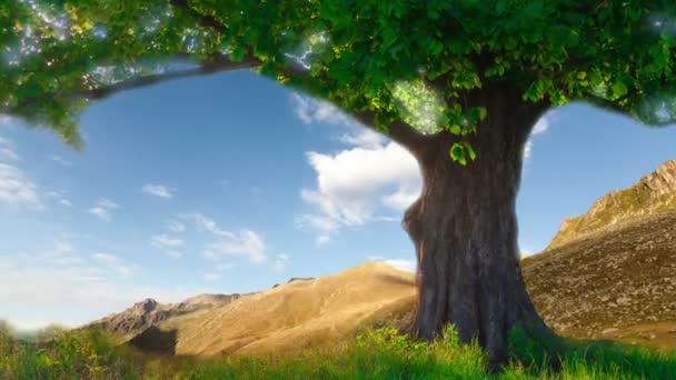 osamělý dub na letní louka