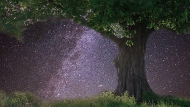 Lonely oak under starry sky