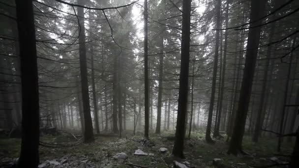 foresta nebbiosa autunnale