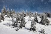 alberi ricoperti di brina e neve in montagna