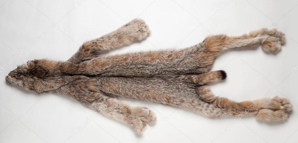 Lynx Pelt On A White Background Stock Photo